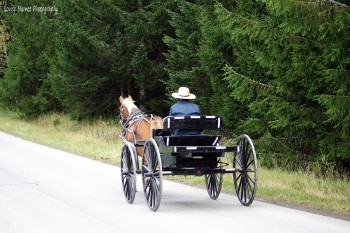Photo amish man