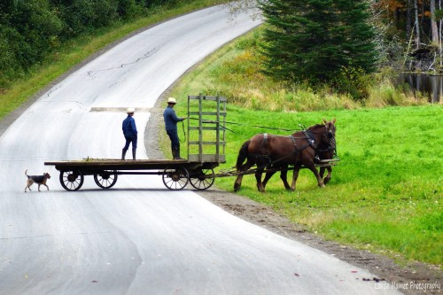 Photo chariot