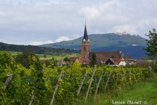 Berghein et son vignoble / Bergheim surrounded by its vineyards