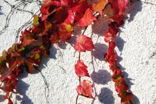Photo 28-10-2014 15 52 24