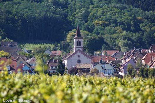 Riquewihr dans son écrin de vignes / Lush vineyards around Riquewihr