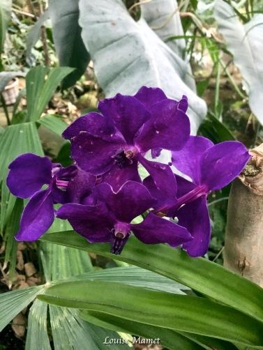 Orchidées -1