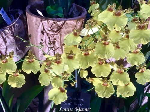 Orchidées -2