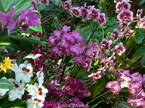 Orchidées -4